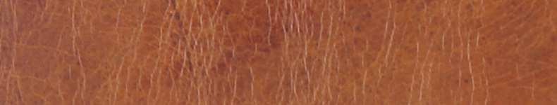 Rodeo-Leder-790-x150